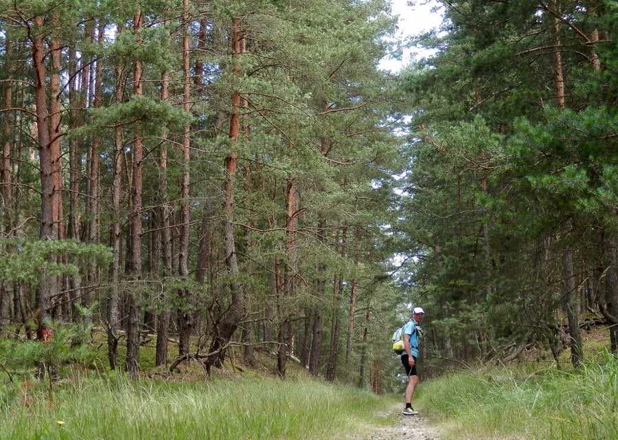 Schnurgerade geht es durch die Schorfheide. Rechts und links gibt es jede Menge Waldhimbeeren und Heidelbeeren.