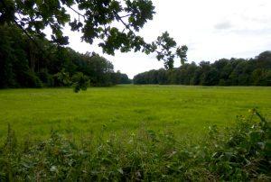 Idyllische Wiesen, umrahmt von Wäldern am Lübbesee. (Foto: Jörg Levermann)